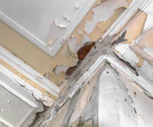 humidity damage1 300x250 Mold Damage